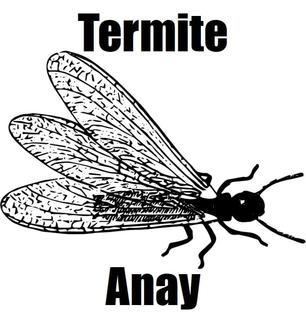 Termite in Tagalog