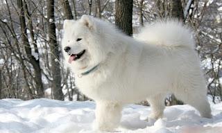 Köpeğime İsim Arıyorum Köpek İsimleri