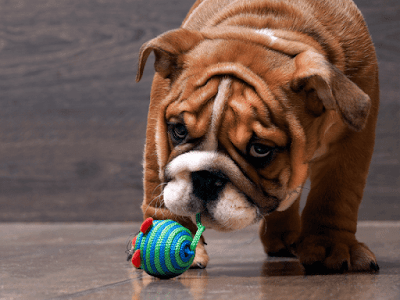 Challenge Your Dog with new toys