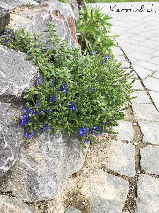 Steinmauer Pflanzen Garten Trockenmauer