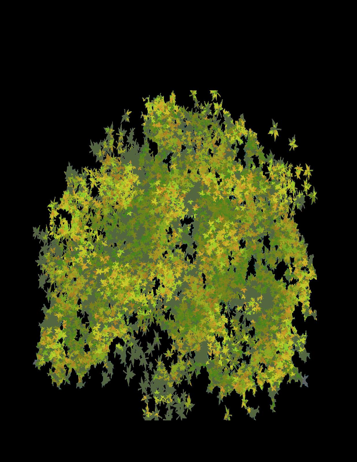 Oak Tree Plan View Png 39842 | ZSOURCE