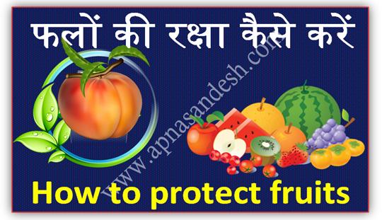 फलों  की रक्षा कैसे करें - How to protect fruits