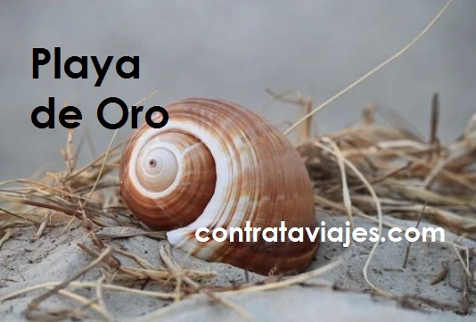 Playa de Oro en Vallarta con un caracol al centro