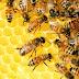 Februártól újra igényelhetők a méhészeti támogatások
