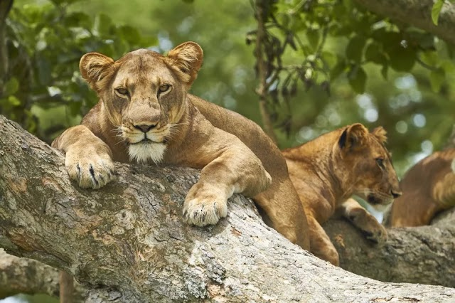 Queen Elizabeth National Park, Uganda: The Complete Guide