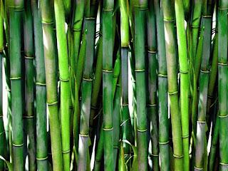 proses-pengawetan-bambu.jpg