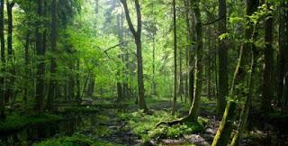 Klasifikasi Sumber Daya Alam Berdasarkan Sifat, Potensi, Jenis, Lokasi, dan Daya Pakainya