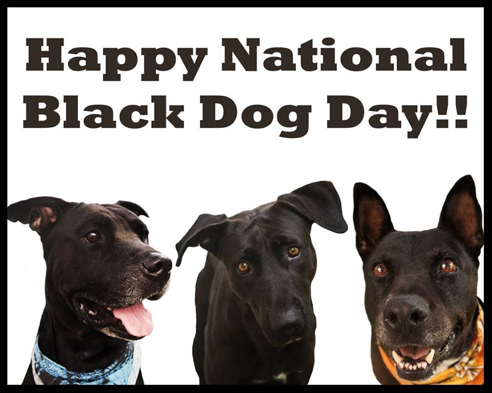 National Black Dog Day Wishes for Instagram