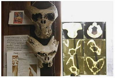 Estranhos-cranios