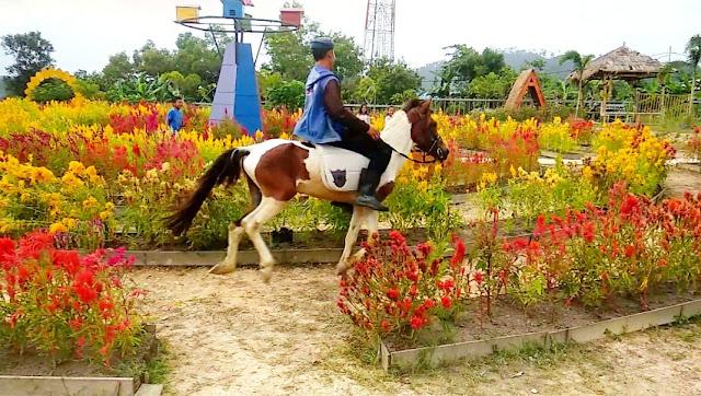 Berkuda di Agro Piknik Sei Temiang Batam