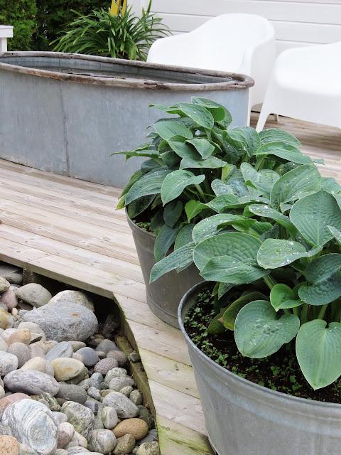Å ha terrasse som hage - Sink, tre og elvestein sammen med Hosta IMG_3438 (2)