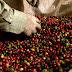 Turismo é impulsionado com a produção de café, vinho e culinária na Chapada Diamantina
