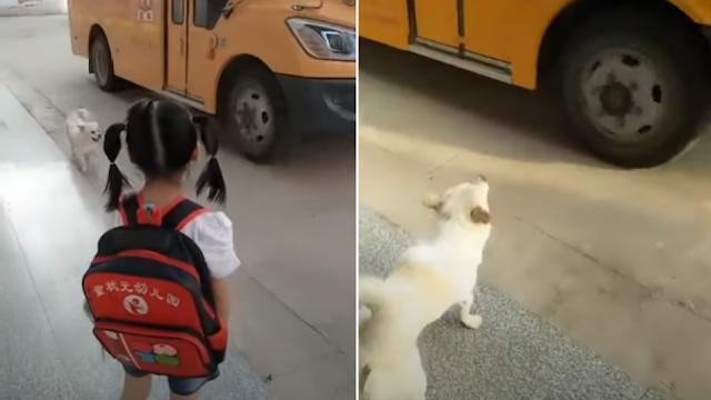 Видео: Собака провожает и встречает хозяйку со школьного автобуса