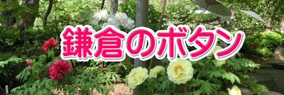 鎌倉のボタン