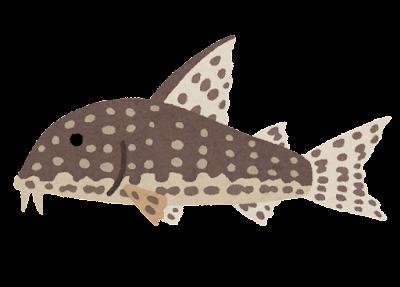 コリドラスステルバイのイラスト(熱帯魚)