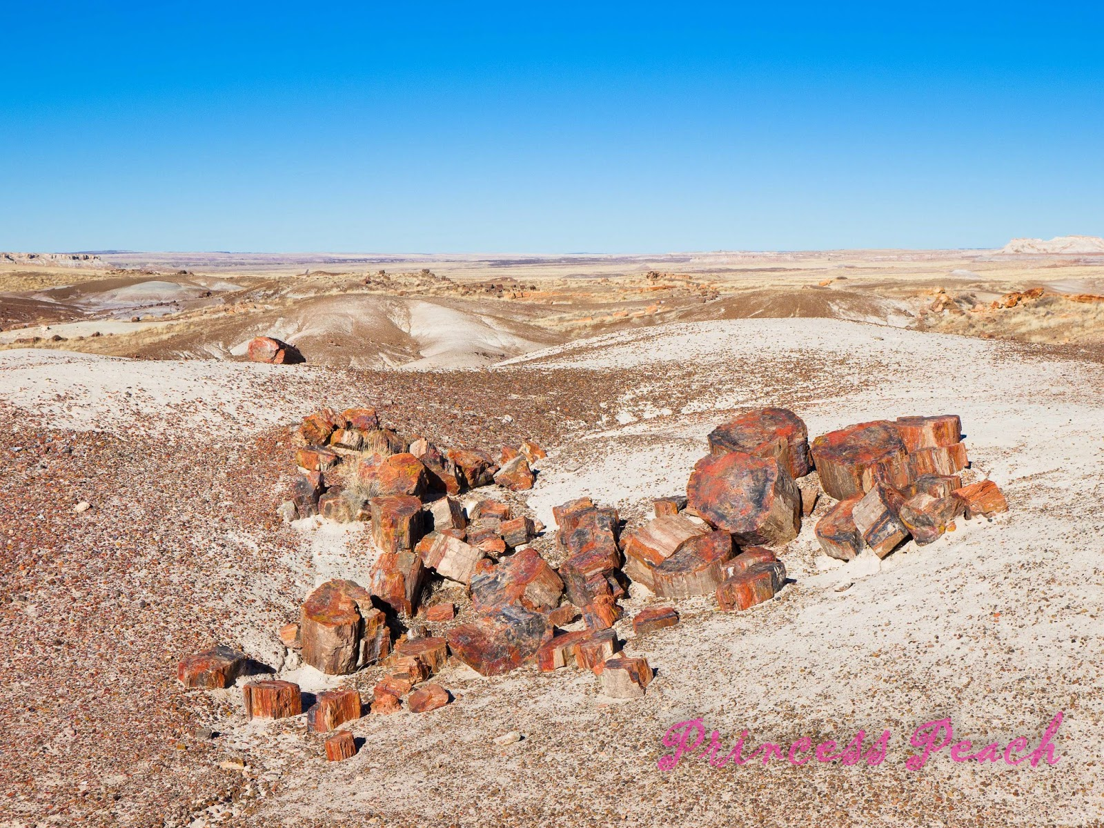 Petrified-Forest-National-Park-石化森林國家公園