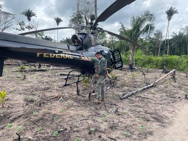 Maranhão ; Polícia Federal encontra 85 mil pés de maconha em terras indígenas