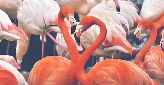 حديقة حيوانات الشارقة