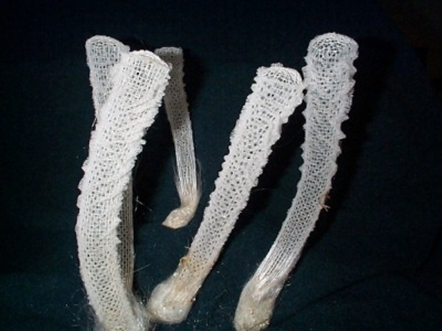 venus glass sponge