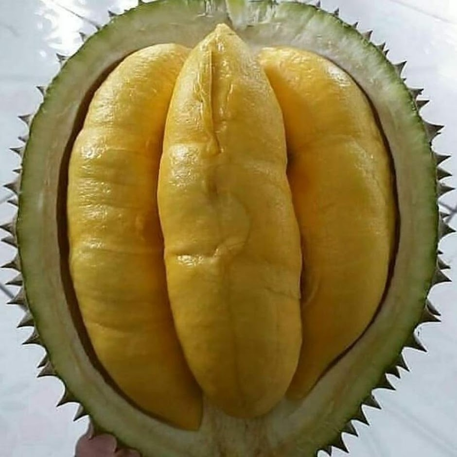 bibit durian bawor super cepat berbuah Kalimantan Tengah
