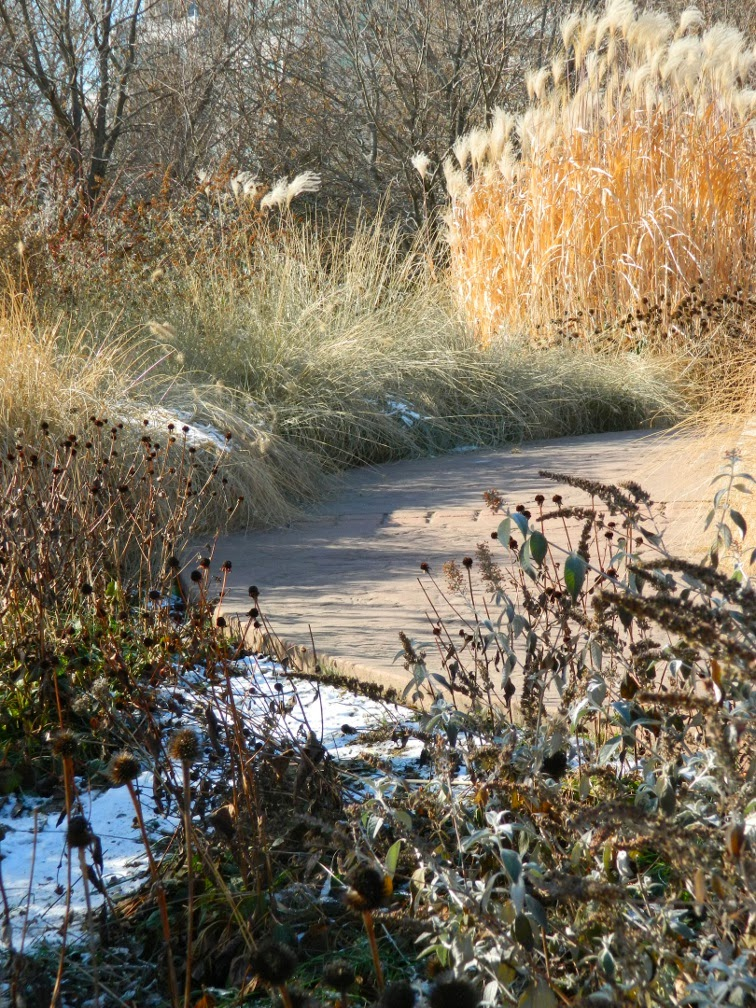 Toronto Music Garden Courante winter ornamental grasses by garden muses-a Toronto gardening blog