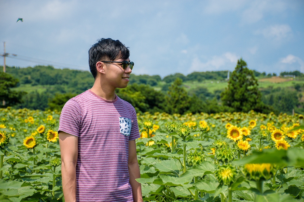 Kimkyungsuk Sunflower farm jeju korea
