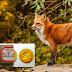 Φθινοπωρινό Πρόγραμμα εναερίων ρίψεων εμβολίων-δολωμάτων κατά της λύσσας, στην ΠΕ Φλώρινας,