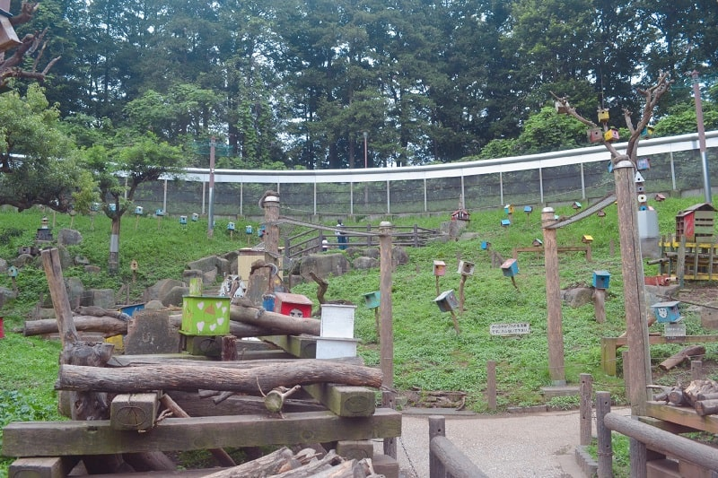 Machida Squirrel Garden: One of the oldest and tiny zoo of Japan
