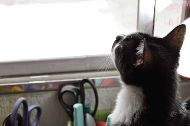 donnarita - srmarido - gatos - rocky - literatura - livros