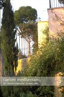 Zypressen, Kiefern und Kletterpflanzen für einen Garten auf Mallorka