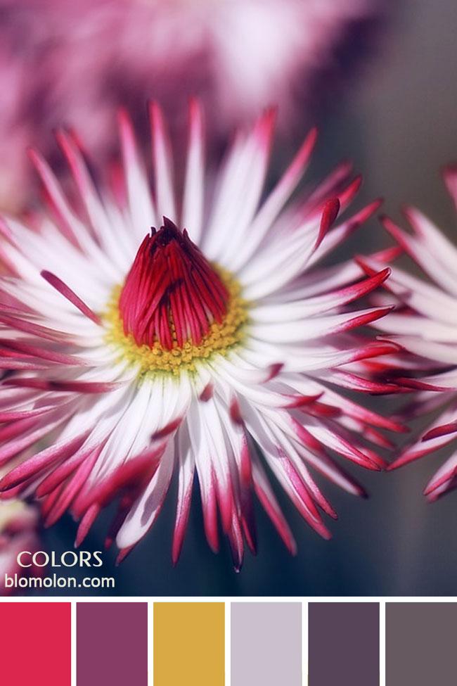 paletas_de_colores_23_inspiracion_primavera_5