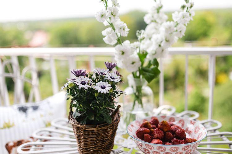 Jakie kwiaty na balkon?