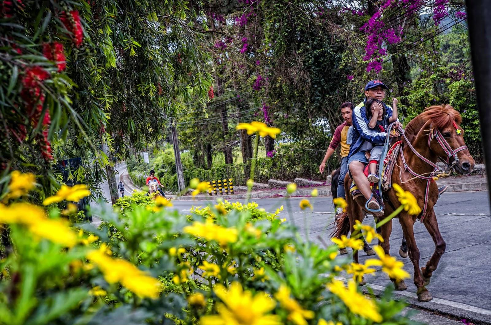 Baguio City Wright Horseback Riding Livelihood