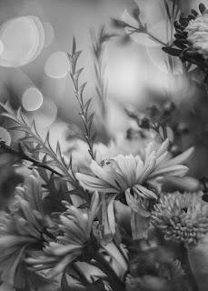 صور ورود سوداء، اجمل صور زهور سوداء اللون 7