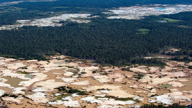 Next 50 years Amazon rainforest could collapse