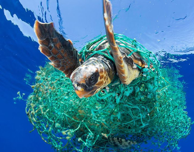 ما الذي يسبب تلوث المحيط؟