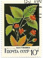 Selo Rubus saxatilis