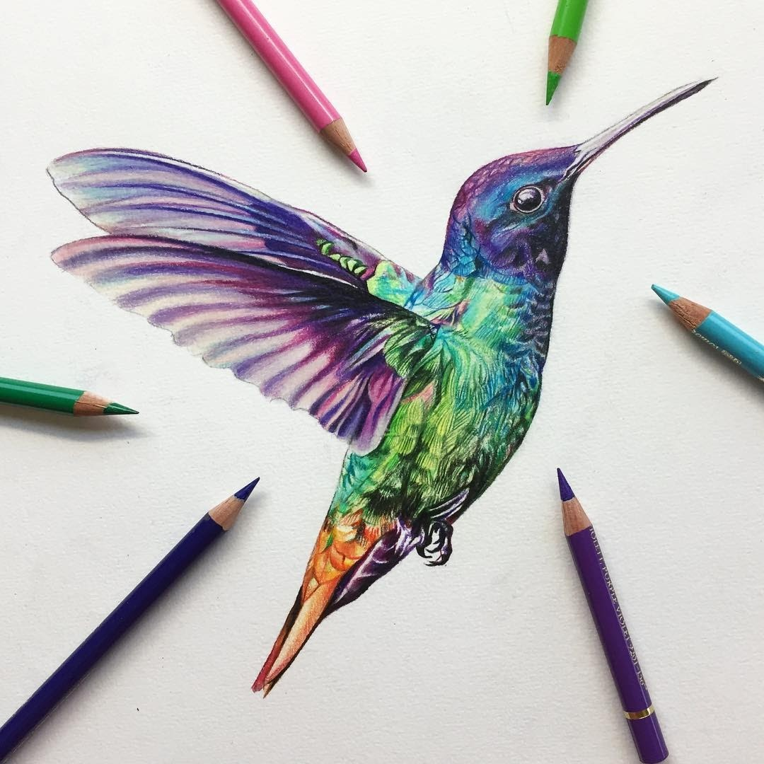 08-Hummingbird-Liam-James-Cross-Wild-Animals-Drawings-and-Paintings-www-designstack-co