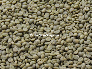 Cà phê nhân sống robusta chế biến ướt
