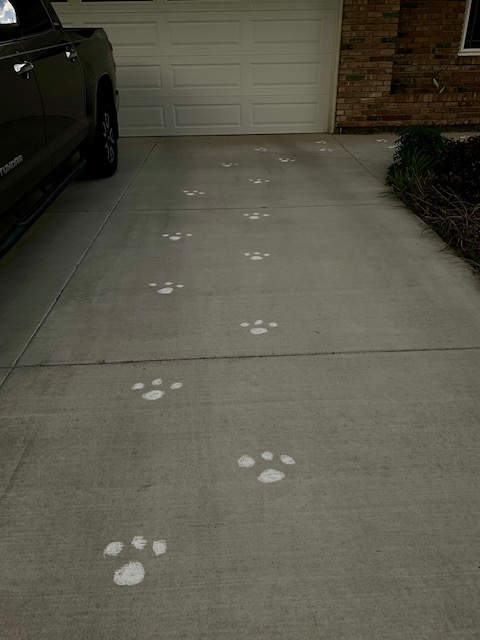 Easter bunny footprints