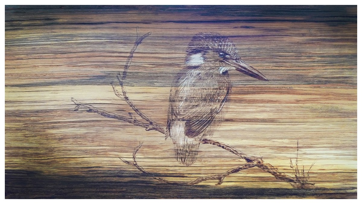 10-The-Kingfisher-Eben-Cavanagh-Rautenbach-LeRoc-Animal-Drawings-using-Pyrography-www-designstack-co