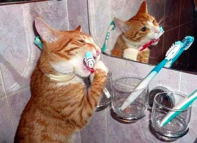 طرق اختيار منتجات الأسنان الخاصة بالقطط