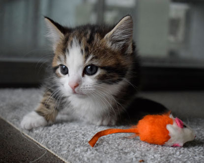 Cats Protection's Bridgend Adoption Centre kitten