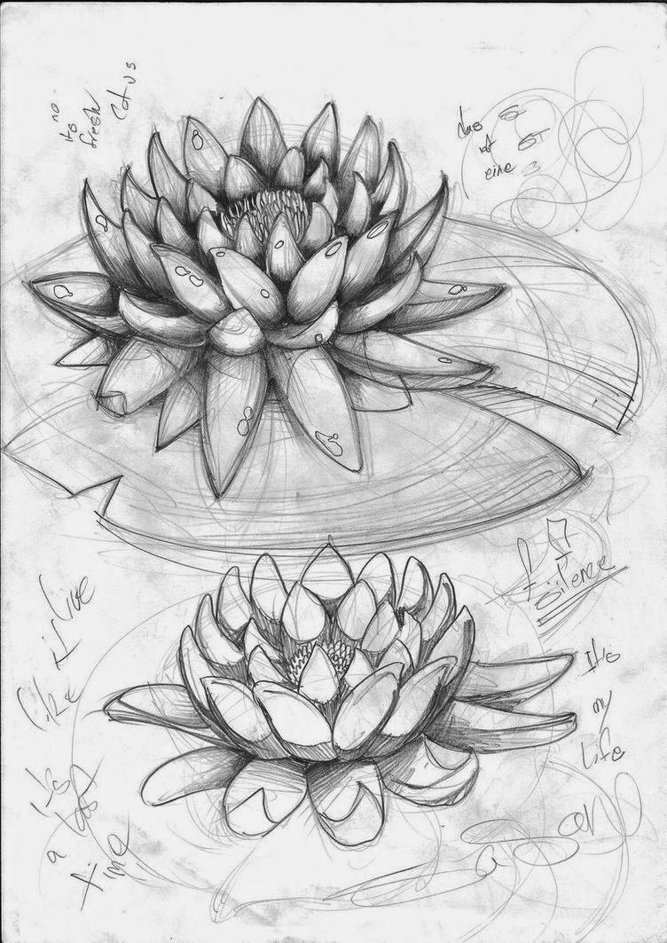 Gambar Sketsa Bunga Teratai Yang Gampang