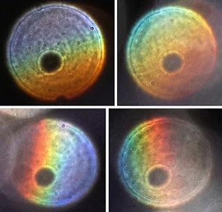 gradient color orbs