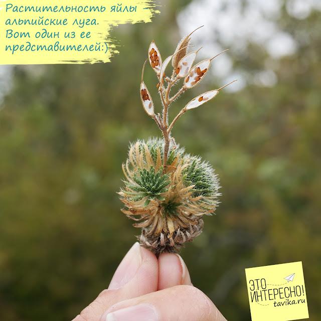 Растения Байдарской яйлы