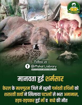 केरल में गर्भवती हाथी की मौत पर अज्ञात लोगों के खिलाफ एफ.आई.आर.