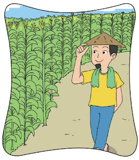 Petani Jagung yang Cerdik