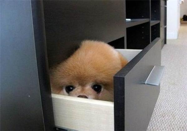 Mỏi mắt tìm kiếm 14 chú chó có biệt tài ẩn thân siêu hạng