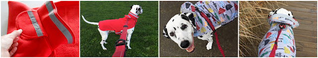 Dalmatian dogs wearing coats